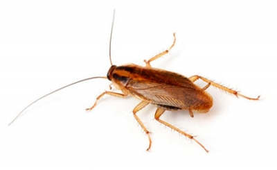 Фото дезинсекция тараканов