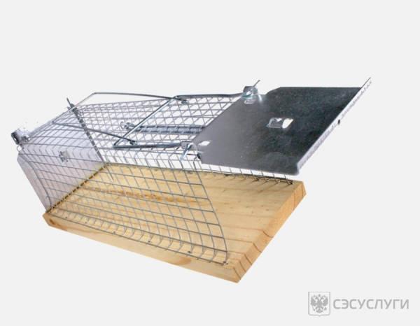 Фото ловушки для крыс
