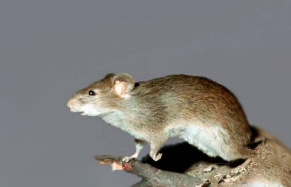 Отпугиватели для мышей
