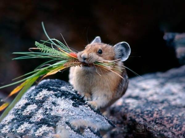 Чем питается мышь?