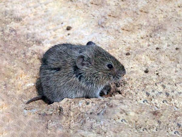 Мышь на складе