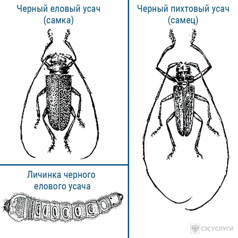 Название жука с длинными усами