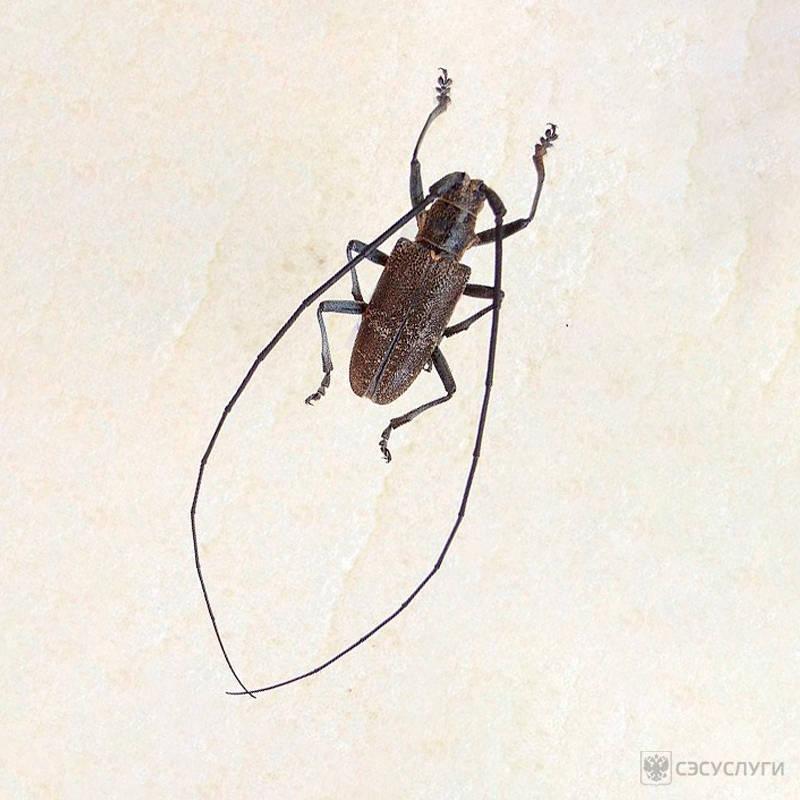 Средство от жука усача