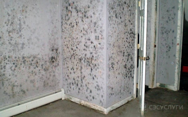 Белая плесень на стенах