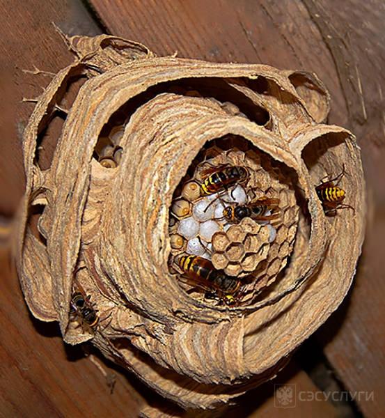Обнаружение гнезда шершней