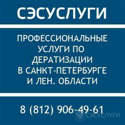 Профессиональная дератизация в СПб