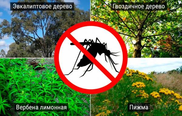 Деревья и кусты от комаров