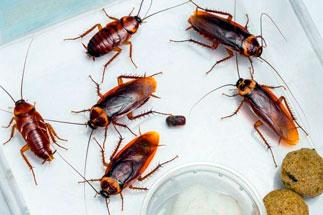 Изображение: Борьба с тараканами