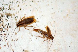 Изображение: Удаление тараканов