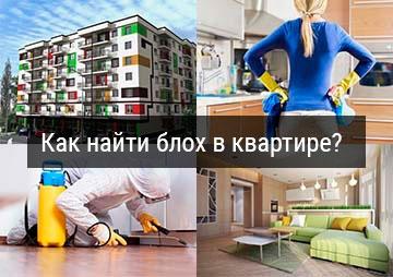 Превью статьи: Как найти блох в своей квартире?